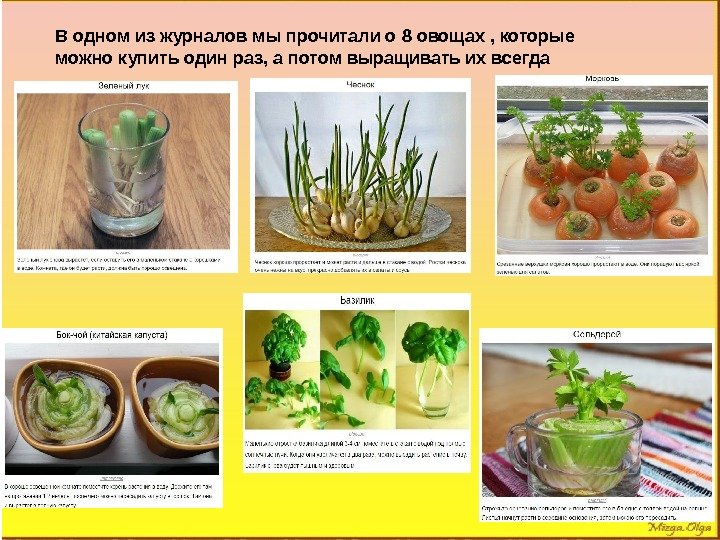 В одном из журналов мы прочитали о 8 овощах , которые можно купить один