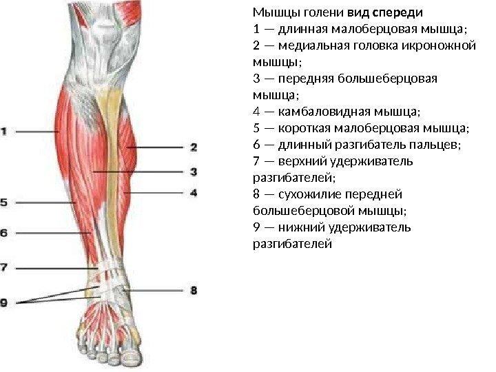 почему болит камбаловидная мышца