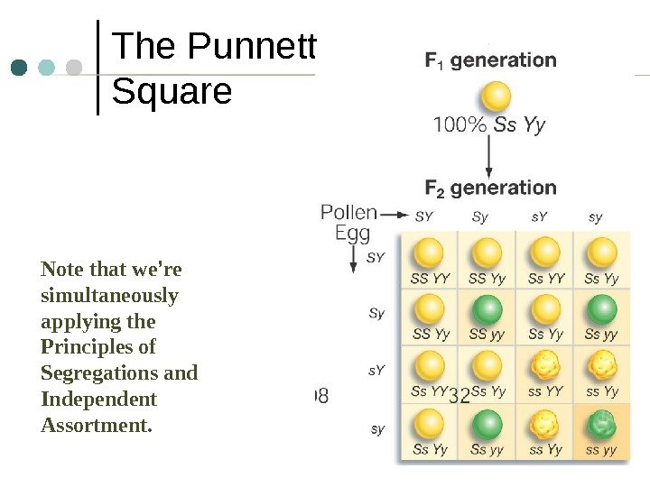 4 The Punnett Square  Note that we ' re simultaneously applying the Principles