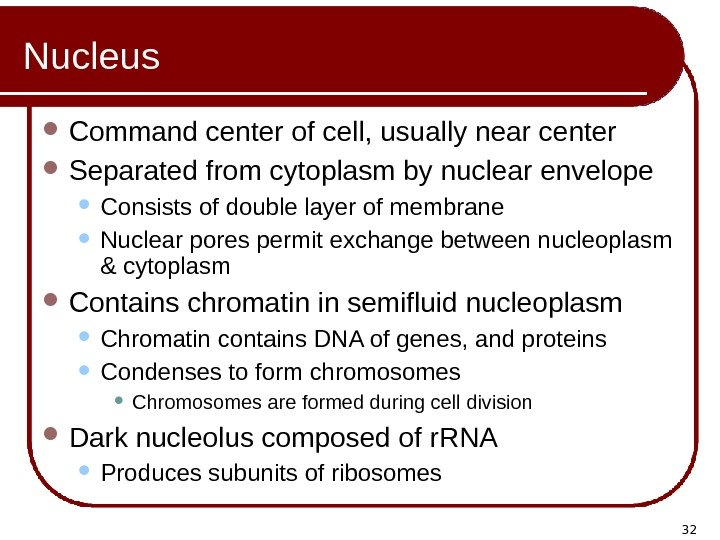 32 Nucleus Command center of cell, usually near center Separated from cytoplasm by nuclear