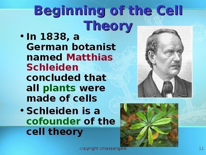 11 Beginning of the Cell Theory • In 1838, a German botanist named Matthias