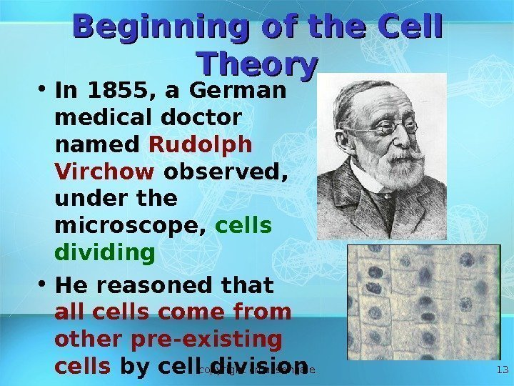 13 Beginning of the Cell Theory • In 1855, a German medical doctor named