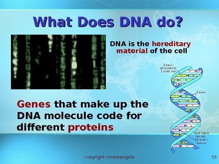 55 What Does DNA do? DNA is the hereditary material of the cell Genes