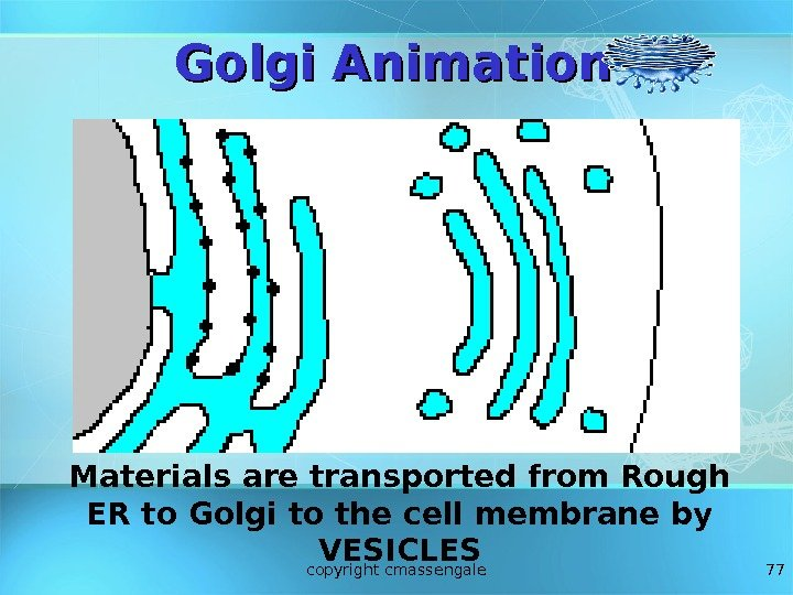 77 Golgi Animation Materials are transported from Rough ER to Golgi to the cell