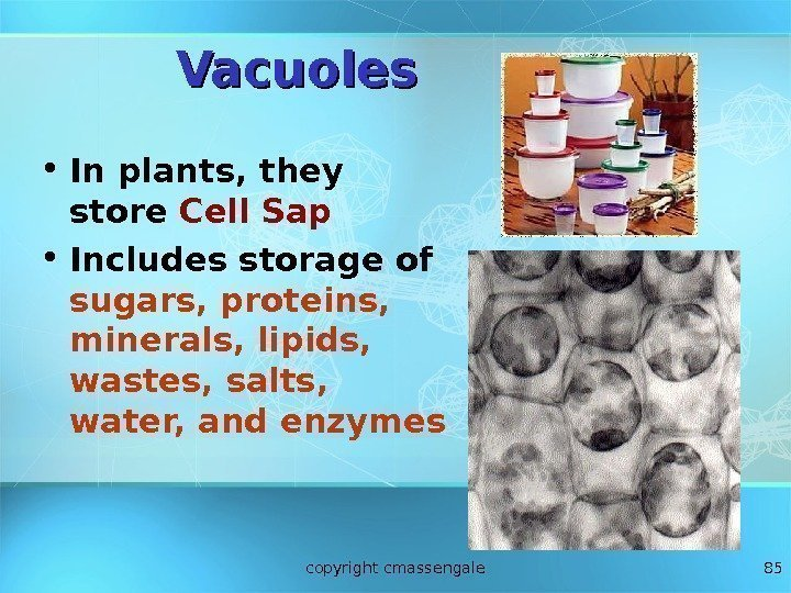 85 Vacuoles • In plants, they store Cell Sap • Includes storage of sugars,