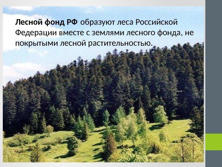 понятие лесного фонда реферат