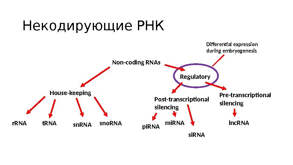 Некодирующие РНК Non-coding RNAs House-keeping Regulatory r. RNA t. RNA sno. RNA Post-transcriptional silencing