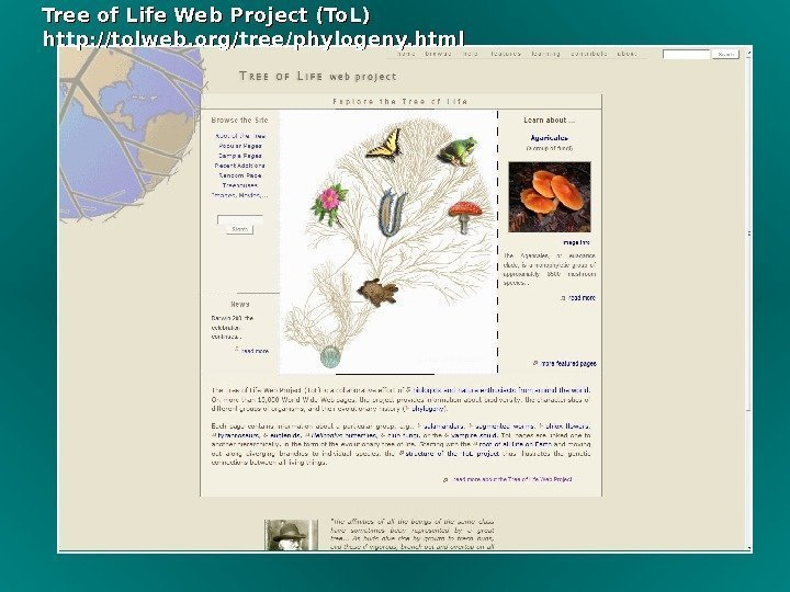 Tree of Life Web Project (To. L) http: //tolweb. org/tree/phylogeny. html