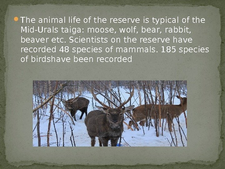 The animal life of the reserve is typical of the Mid-Urals taiga: moose,