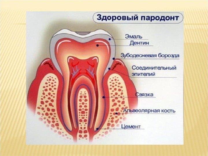 Влияние эндодонтического лечения на развитие болезней пародонта
