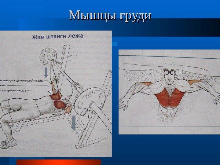 закинуть какие мышцы работают при плавании брасом Телефоны стоматологических