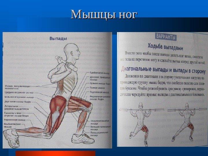 программы какие мышцы работают при плавании брасом профиля для