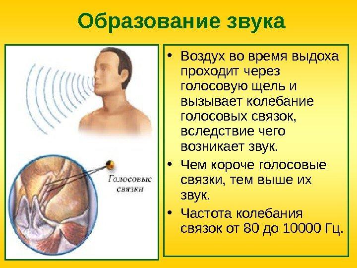 Главная влияние коньяка на связки голосовые термобелье трусами