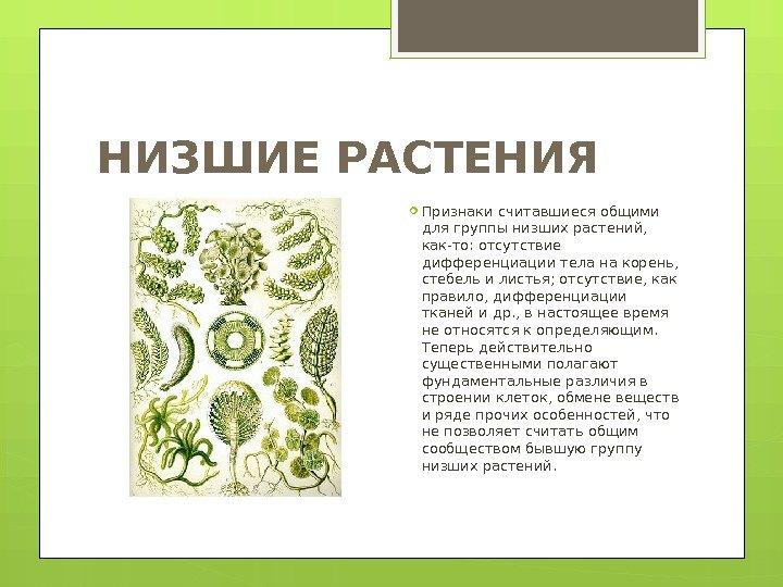 объявление что такое низшие растения кожаная льняная свадьба