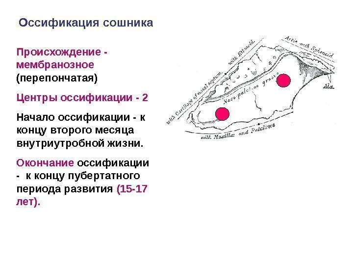 центры остеопатии в россии