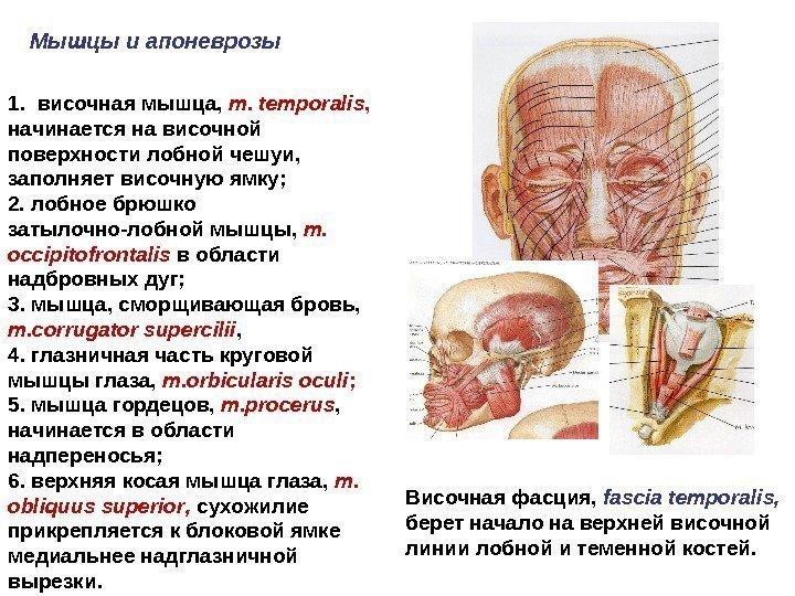 боли в области височно нижнечелюстного сустава