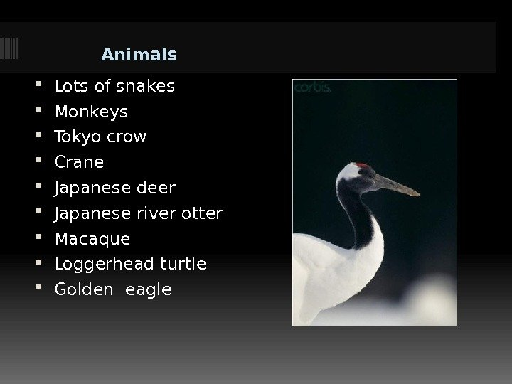 Animals Lots of snakes Monkeys Tokyo crow Crane Japanese deer Japanese river otter Macaque