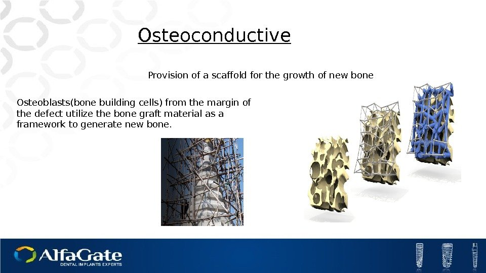 Provision of a scaffold for the growth of new bone. Osteoconductive Osteoblasts(bone building cells)