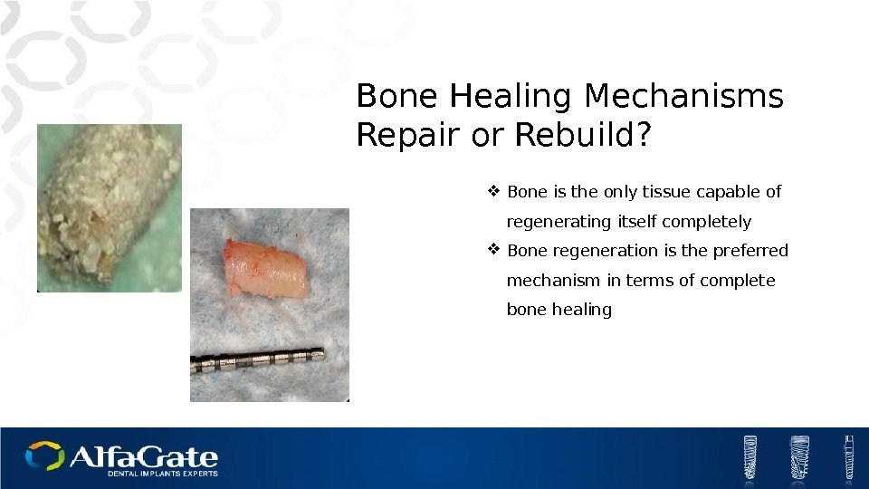 Bone Healing Mechanisms Repair or Rebuild?  Bone is the only tissue capable of