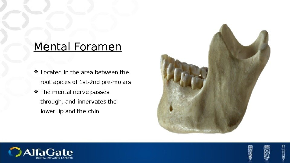 Mental Foramen Located in the area between the root apices of 1 st-2 nd