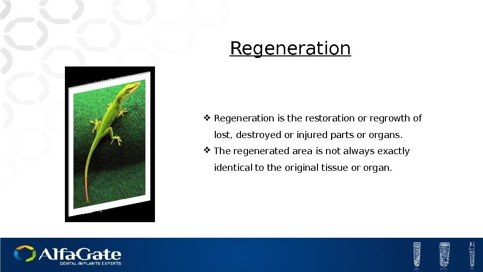 Regeneration is the restoration or regrowth of lost, destroyed or injured parts or