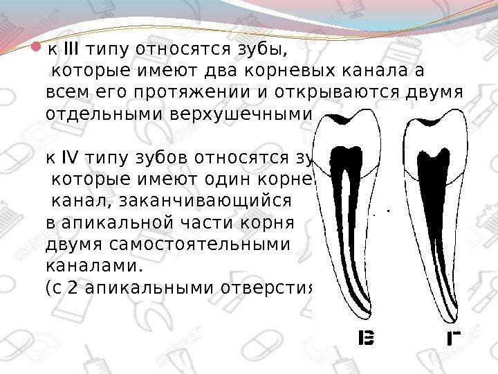 Апикальная часть зуба это 165