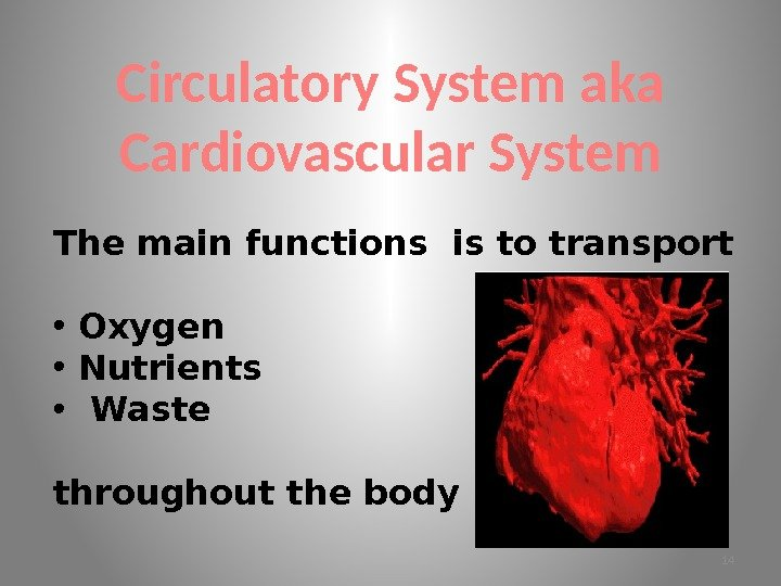Circulatory System aka Cardiovascular System The main functions is to transport • Oxygen •