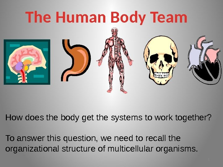 The Human Body Team How does the body get the systems to work together?