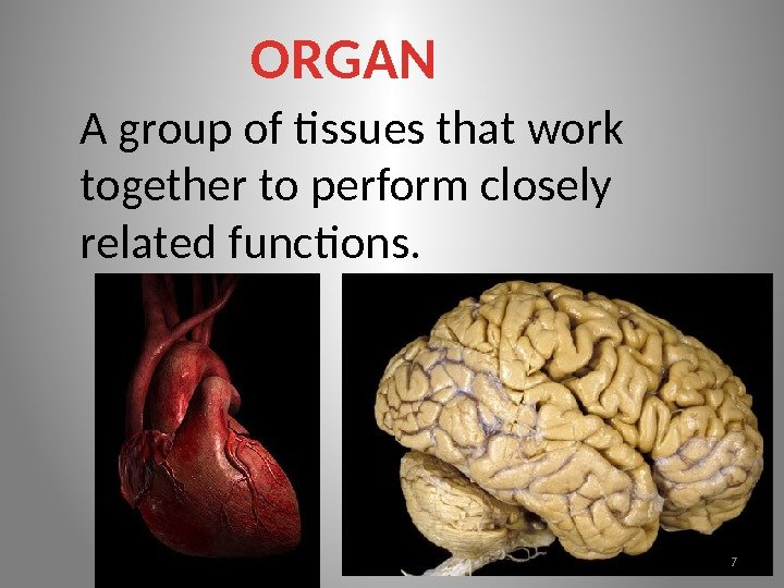 ORGAN A group of tissues that work together to perform closely related functions. 7