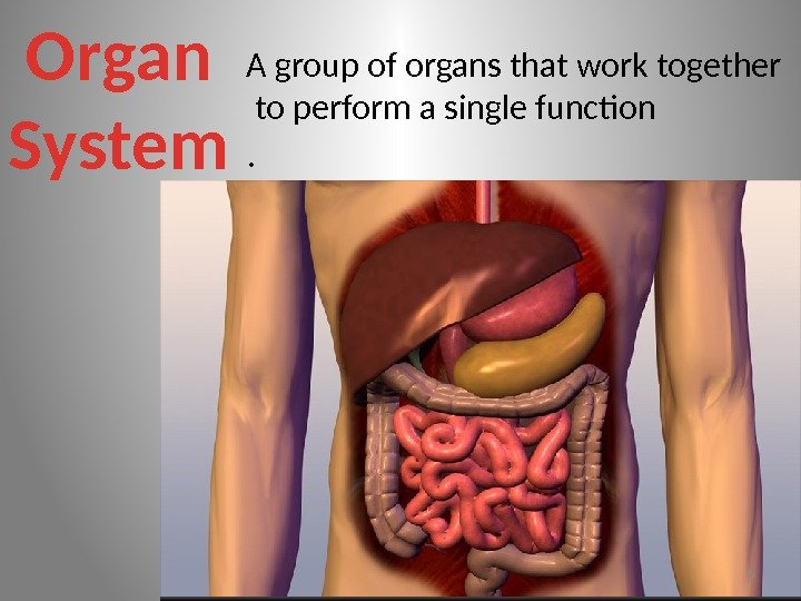 Organ System A group of organs that work together  to perform a single
