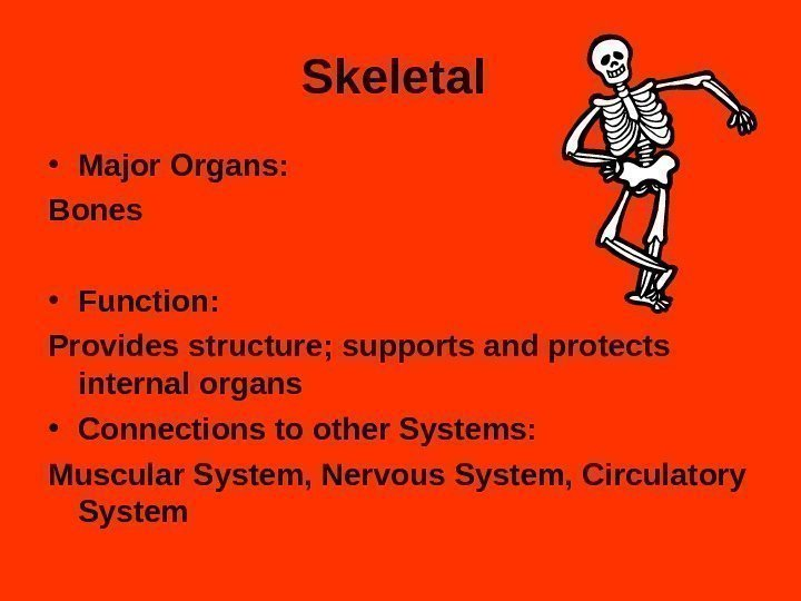 Skeletal  • Major Organs: Bones  • Function:  Provides structure; supports and