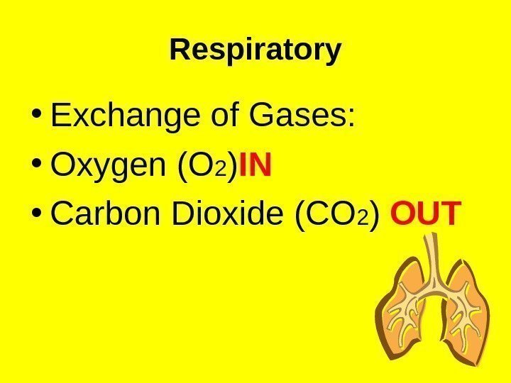 Respiratory • Exchange of Gases:  • Oxygen (O 2 ) IN  •