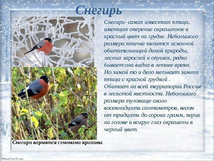 Хищные птицы ульяновской области этого