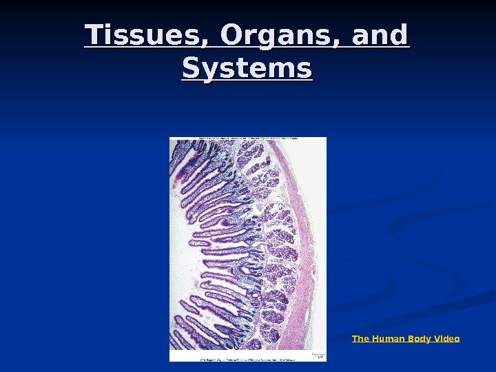 Tissues, Organs, and Systems The Human Body Video