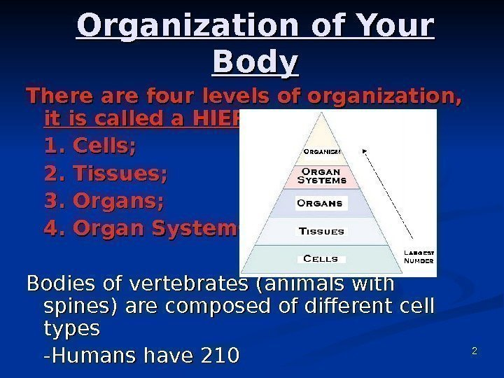 2 Organization of Your Body There are four levels of organization,  it is