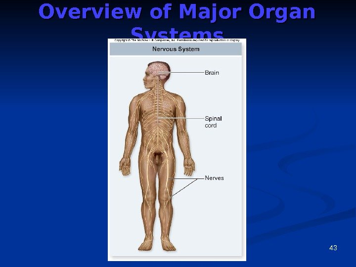 43 Overview of Major Organ Systems