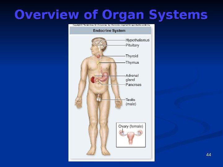 44 Overview of Organ Systems