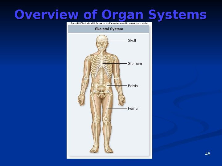 45 Overview of Organ Systems