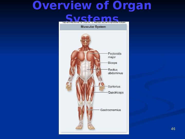 46 Overview of Organ Systems