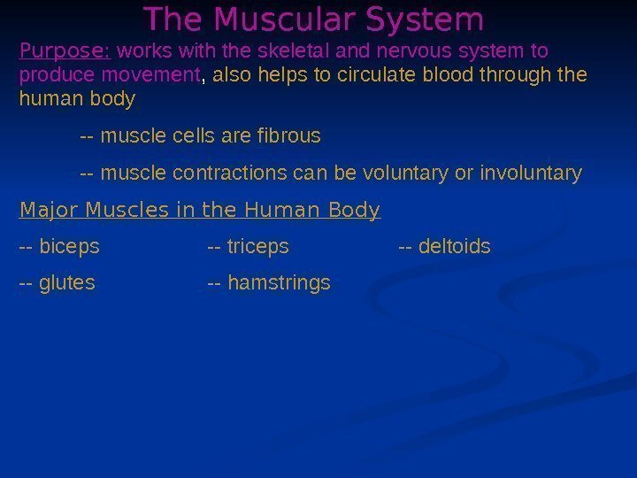 The Muscular System Purpose:  works with the skeletal and nervous system to produce