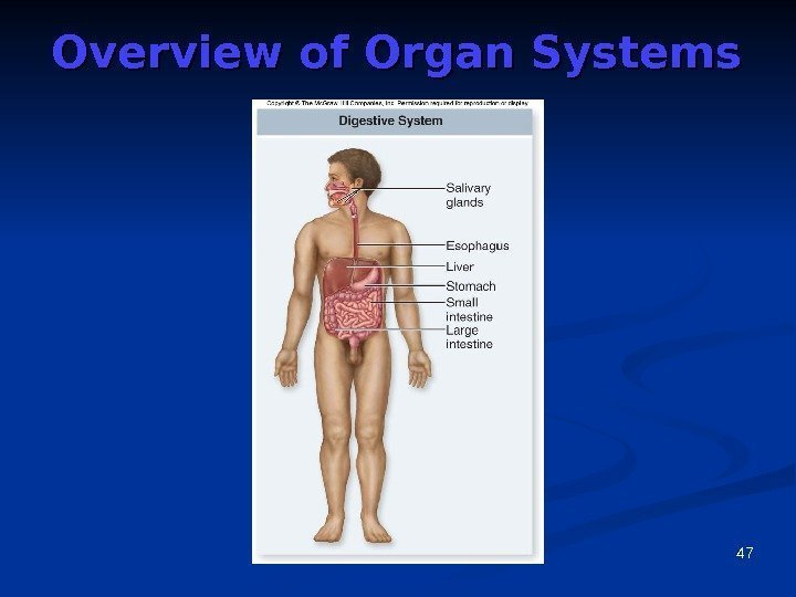 47 Overview of Organ Systems