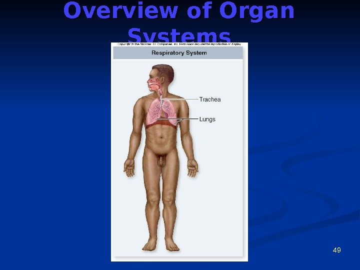 49 Overview of Organ Systems