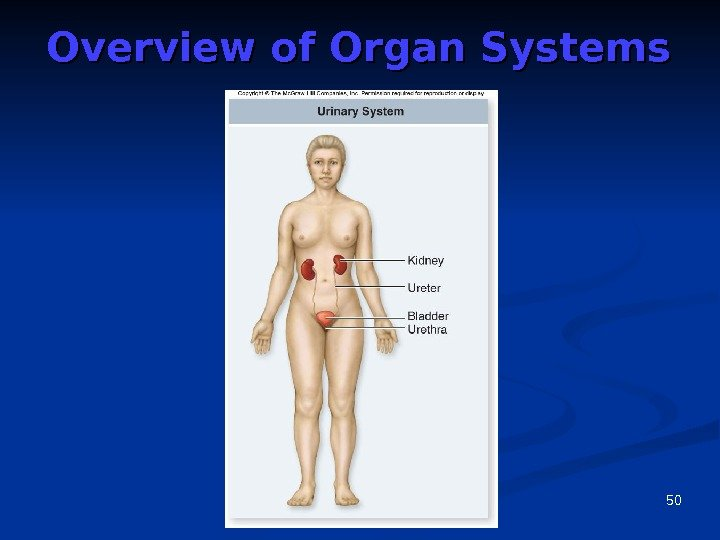 50 Overview of Organ Systems