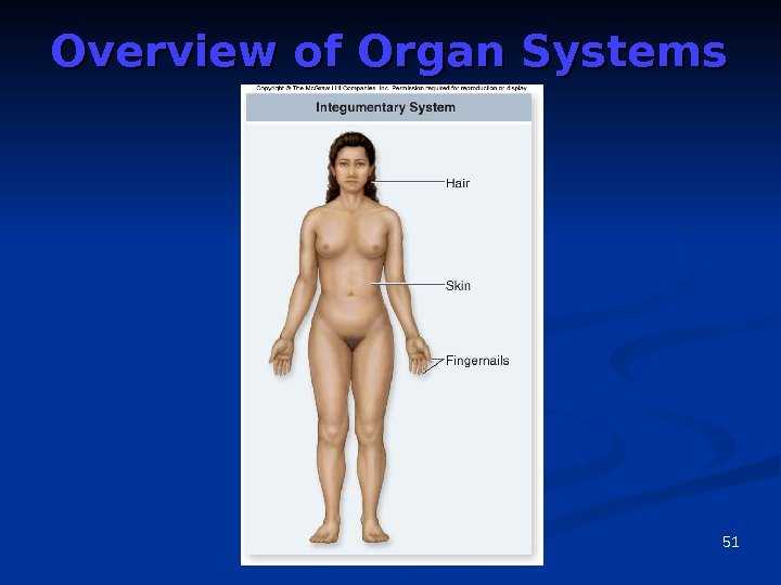 51 Overview of Organ Systems