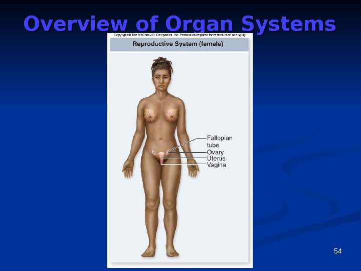 54 Overview of Organ Systems