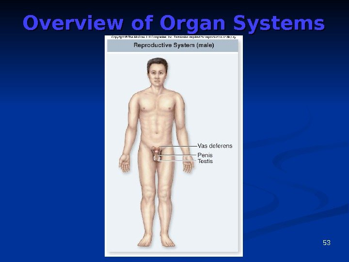 53 Overview of Organ Systems