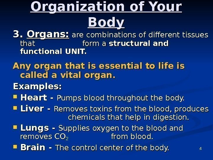 4 Organization of Your Body 3. 3.  Organs:  are combinations of different