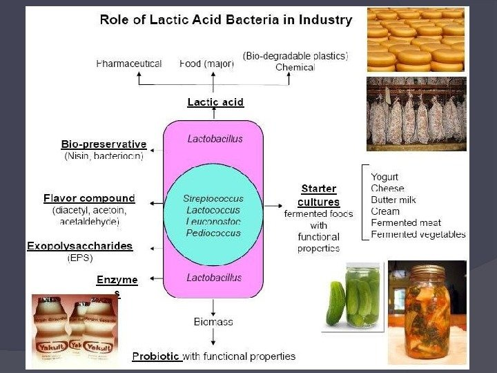 application of lactic acid bacteria Lactic acid bacteria as probiotics: characteristics, selection criteria and role in immunomodulation of human gi muccosal barrier | intechopen, published on: 2013-01.