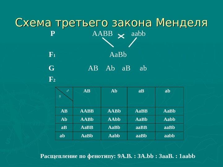 Схема аавв х аавв иллюстрирует
