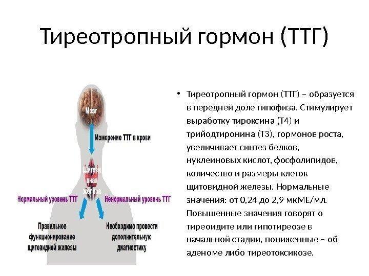 vliyanie-gormona-ttg-na-spermogenez